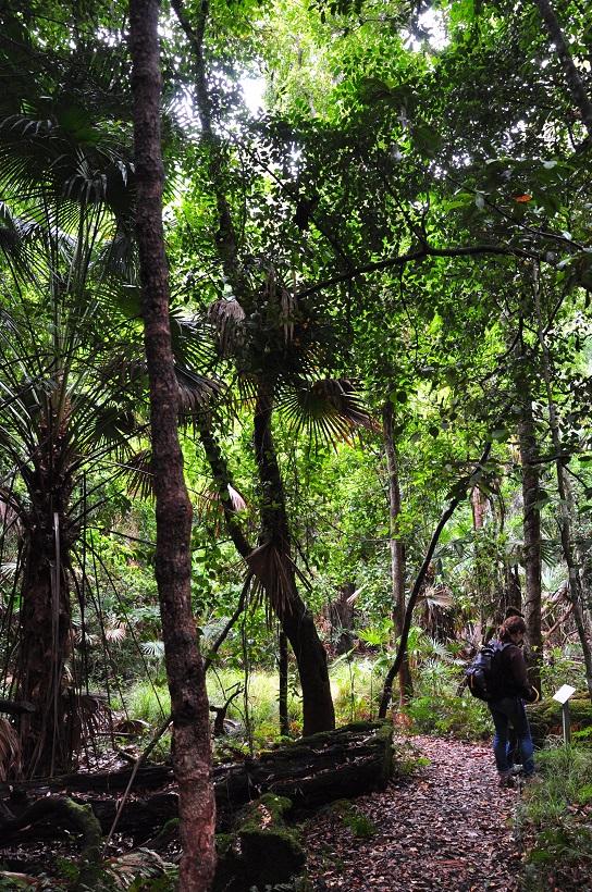 A l′orée d′une forêt vieille de 50 millions d′années