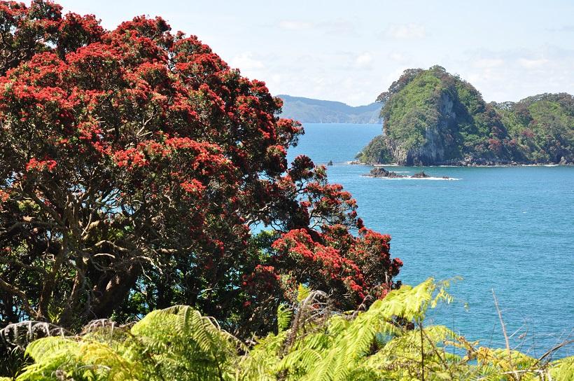 Vue sur l′Océan Pacifique depuis la péninsule de Coromandel