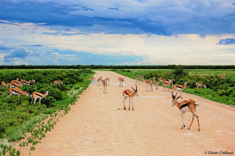 Excursion nature, rencontres locales, et vie sauvage en Namibie